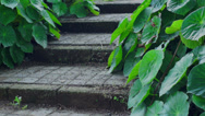 Stock Video Footage of Rustic Steps With Green Plants Dolly