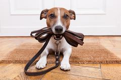 dog leather leash - stock photo