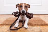 Stock Photo of dog leather leash