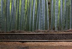 Straw fence and bamboo forest near kyoto. Stock Photos