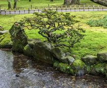 Fragment of a japanese garden with a bonsai tree growing on a bank of the str Stock Photos