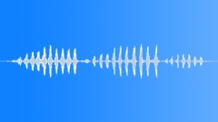 Greater kestrel calling Sound Effect
