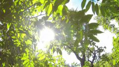 Trees, wind and sun in good weather all the movements 4k Stock Footage