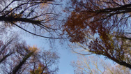 Stock Video Footage of Broadleaf woodland trees in the autumn in England