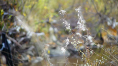 White willow-herbs in autumn forest Stock Footage