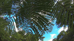 Trees, wind and sun in good weather all the movements Stock Footage