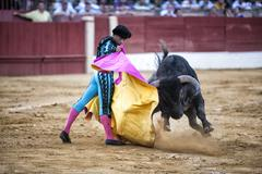 bullfighter luis bolivar bullfighting with the crutch in the bullring  - stock photo