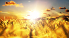 Sunlight streaming through clouds above golden fields Stock Footage