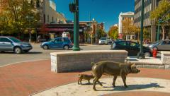 Artwork Sculptures of Pigs in Downtown Asheville, NC Stock Footage