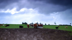 Time lapse of cows on farm with green grass and moody sky Stock Footage