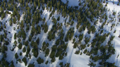 Aerial shot of snow covered forest, Alaskan wilderness - stock footage