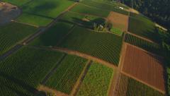 Aerial shot of vineyards, Willamette Valley Oregon Stock Footage