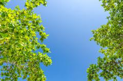 tree branches with leaves against blue sky - stock photo