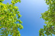 Stock Photo of tree branches with leaves against blue sky