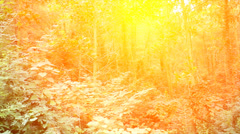 Leaves tremble in the wind Stock Footage
