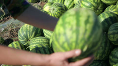 Heap of green watermelon on the field Stock Footage