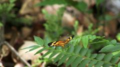 Butterfly Amazon Rain Forrest - stock footage