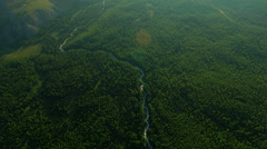 Flight over forest and river in mountains Altai, Siberia Stock Footage