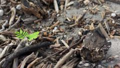 Green Plant Among Dead Wood Dolly Stock Footage