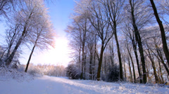 Man takes a walk through beautiful snowy forest scene. High quality HD video Stock Footage