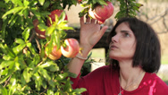 Stock Video Footage of Pomegranate fruit. Woman looking pomegranate