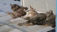 Stock Video Footage of Homeless cats napping on the roof