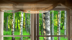 Window and birch trees in summer Stock Footage