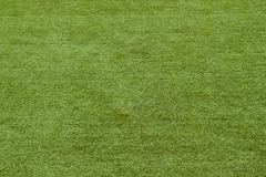 Green grass background . Stock Photos