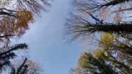 Stock Video Footage of Tracking through broadleaf woodland trees in the autumn in England