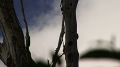 Woodpecker Amazon Rain Forrest - stock footage