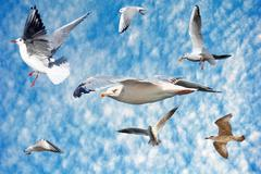 Group of sea gulls Stock Photos