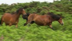 Wild Horses 1 Stock Footage