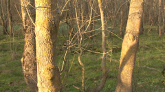 Dynamic crane shot in spring forest. Stock Footage