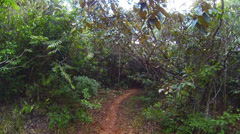 Personal perspective of walking on a path in the forest. Stock Footage