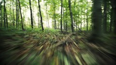 Running through forest in fall 1 Stock Footage