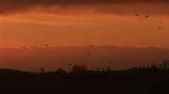 Bids flying in the evening sky Stock Footage