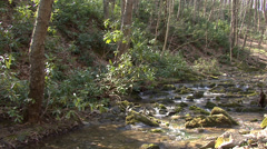 Pure fresh water brook in spring forest Stock Footage