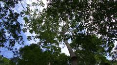 shot of trees Amazon Rain Forrest - stock footage