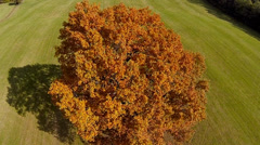 Stock Video Footage of tree in autumn