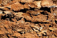 extreme close up  decaying ant eaten log - stock photo