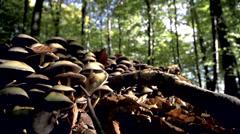 Mushrooms in fall Stock Footage