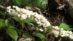 Fungi Amazon Rain Forrest - stock footage