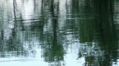 A reflection of green trees is in the river Stock Footage