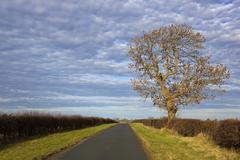 autumn ash tree - stock photo