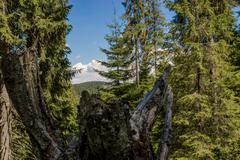 Transylvania, Apuseni mountains stump in the forest summer landscape Stock Photos