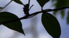 woodpecker Amazon Rain Forrest - stock footage