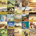 Stock Illustration of african safari