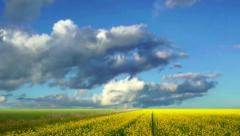 Yellow field Stock Footage