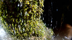 Dolly by mosses and drops in a waterfall Stock Footage
