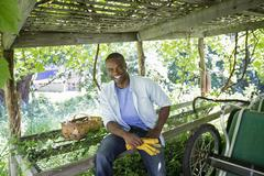 A farm growing and selling organic vegetables and fruit. A man working. Stock Photos